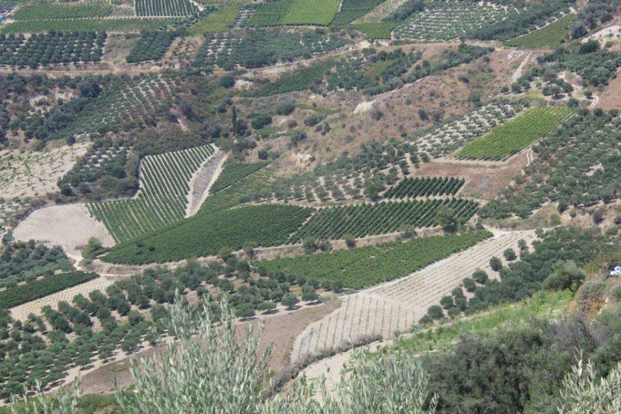 GenussAgenten auf den Spuren griechischer Weine…